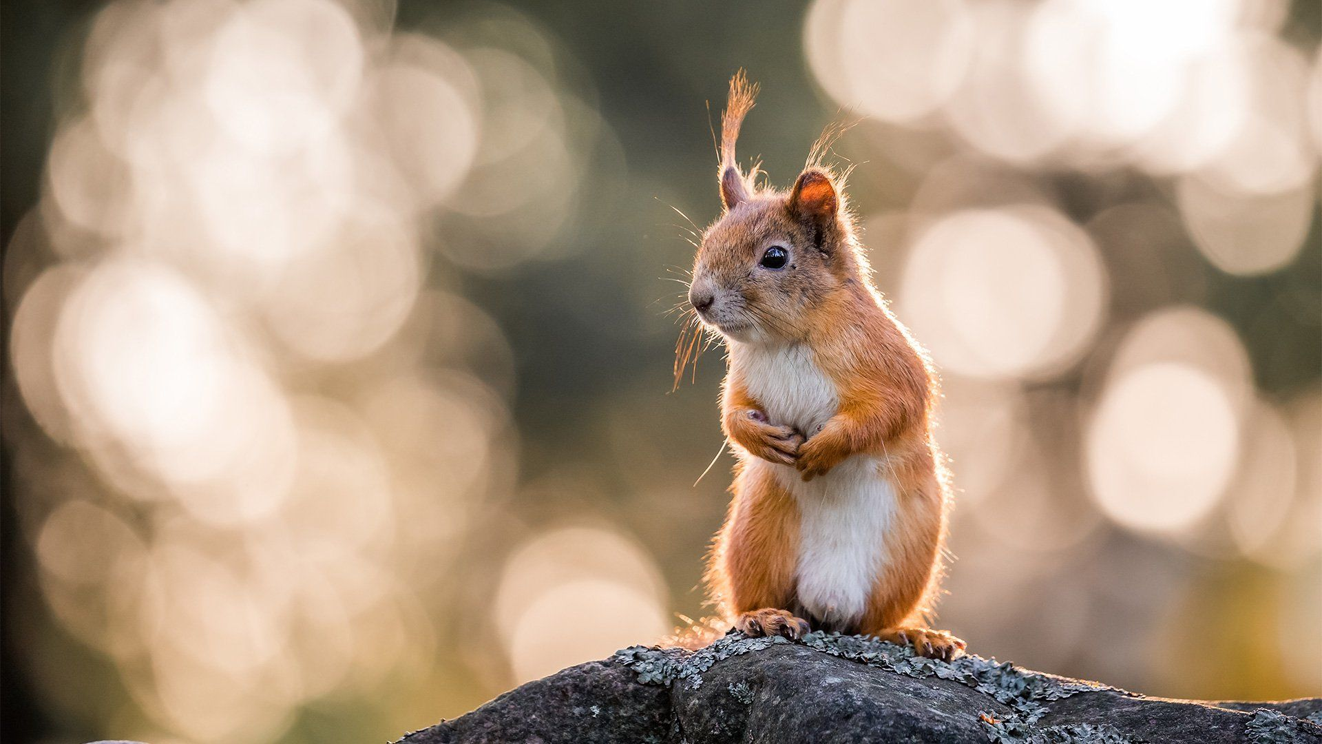 A squirrel stands on a tree branch, the dappled golden sunlight behind it creating a circular bokeh effect background.